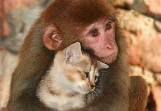 monkey and cat