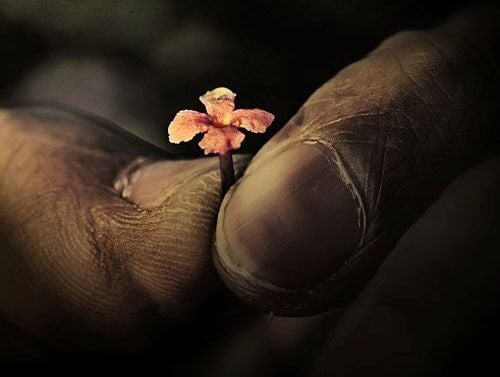 old-hand-holding-tiny-flower