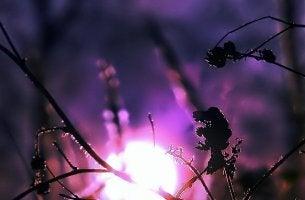 moon purple grass