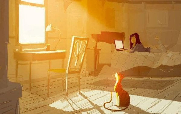 cat in the sun, girl on computer