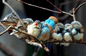 Birds Together on Branch