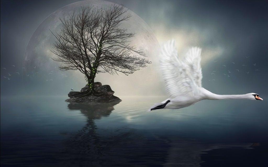 Swan Flying By Island