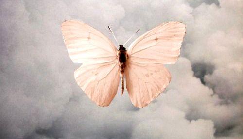 pink-moth