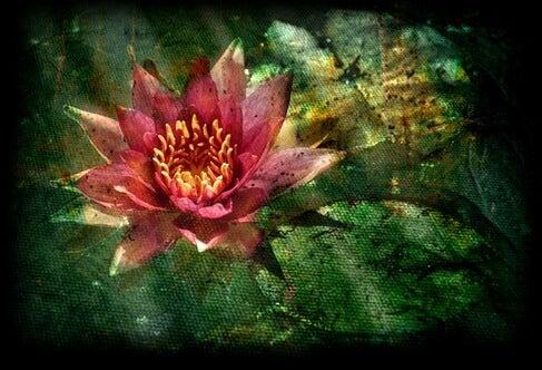 연꽃처럼 살라