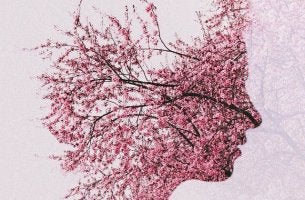 Face of Cherry Blossoms
