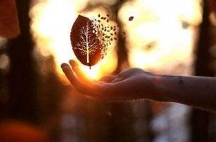 disintegrating leaf