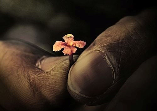old-hands-holding-tiny-flower