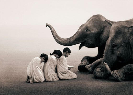 three-children-bowing-before-an-elephant