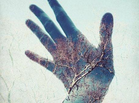 tree on hand