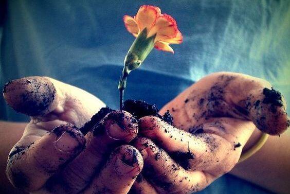 flower growing in hands