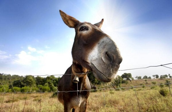 Some People Are Like Buridan's Donkey
