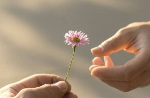 Person Handing Other Flower
