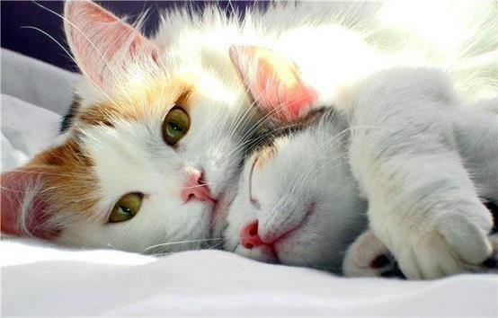 cats snuggling