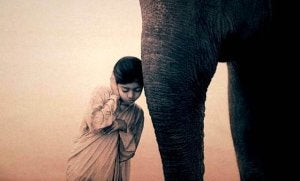 girl and elephant
