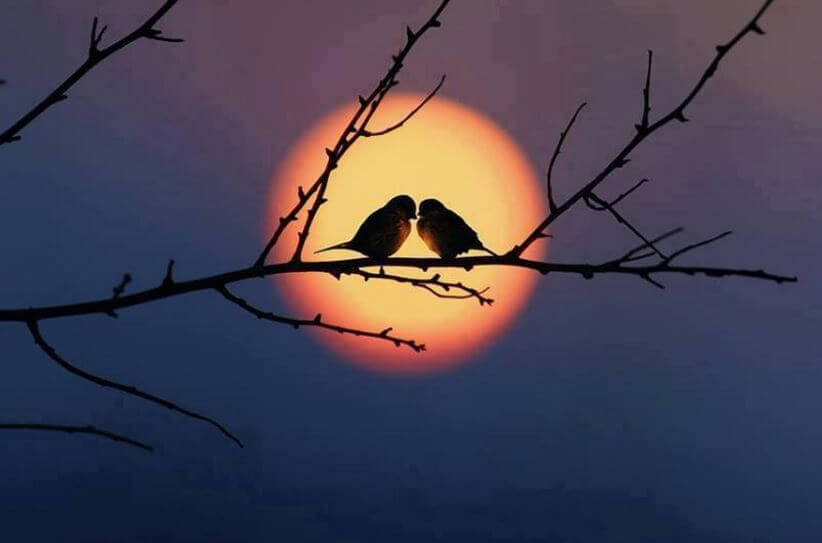 two birds together on a branch