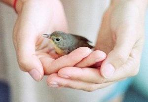tiny bird in a pair of hands