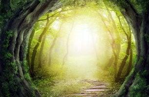 tree light tunnel