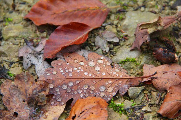 leaves with dew drops