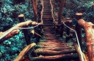Life path made of wood