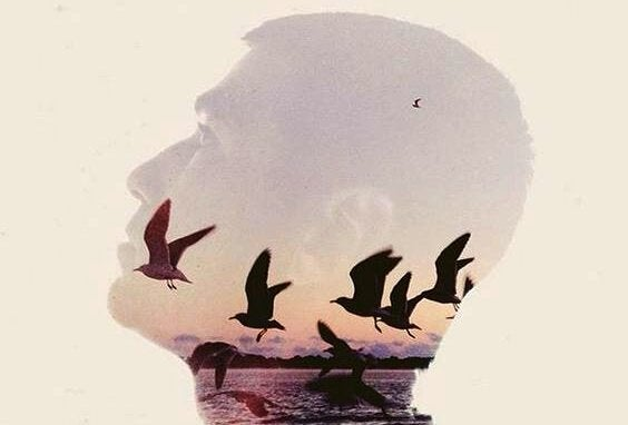 silhouette of man birds flying