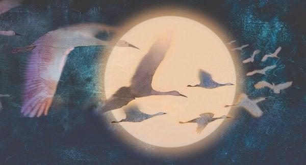 birds flying in the night sky