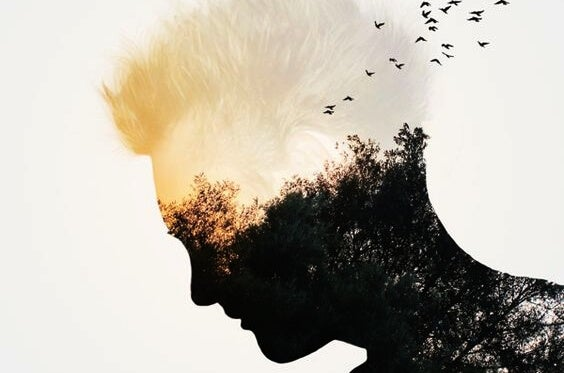 a silhouette of a man's face with birds in a forest