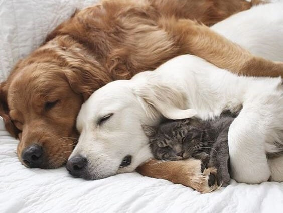 Three animals sleeping together.