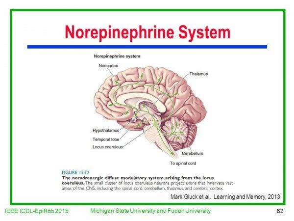 Norepinephrine system