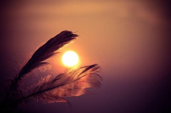 feathers in front of a sunset