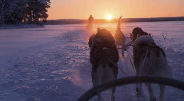 Dogsled in Finland: sisu.