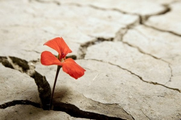 A resistant flower growing in the hard ground.