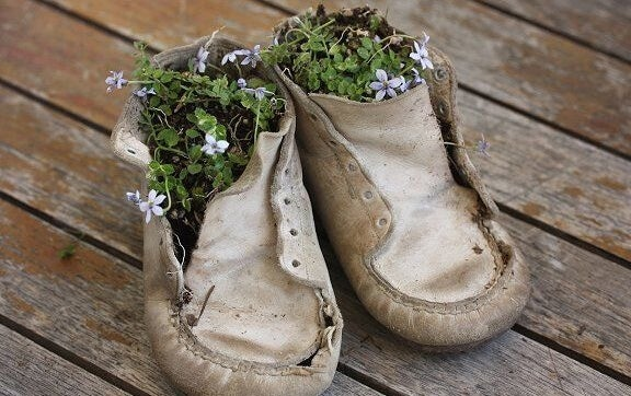 flowers growing in a pair of children's shoes