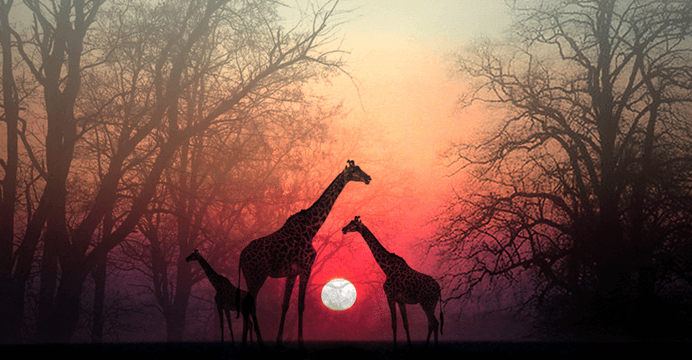 Take a Moment for Your Soul to Catch up with You: a Beautiful African Story
