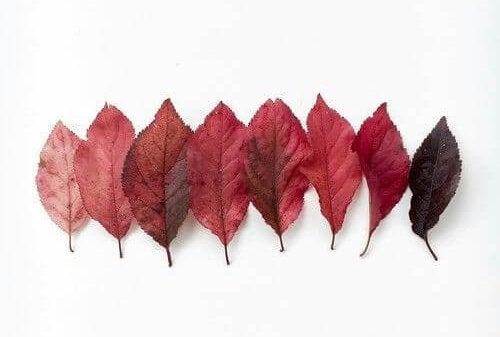fall leaves in a row, of different colors