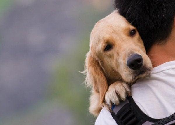 man's best friend, dogs