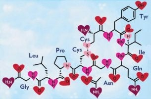 the chemical structure of oxytocin
