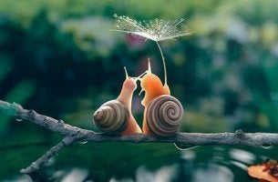 two snails sitting on a branch together