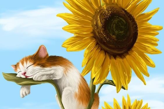 sunflowers kitten