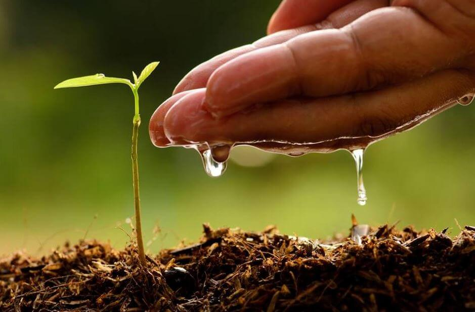 A hand is watering a tiny new plant.