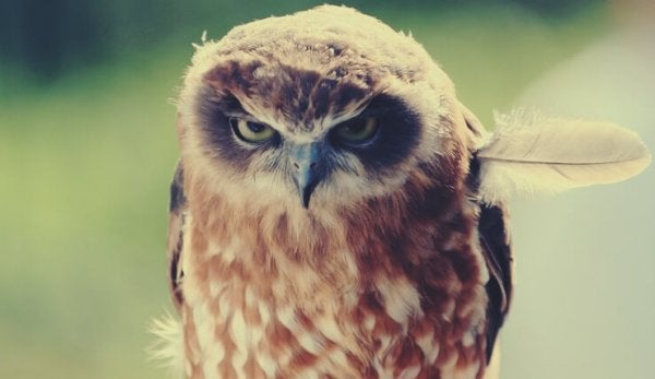 an angry owl feeling negative emotions