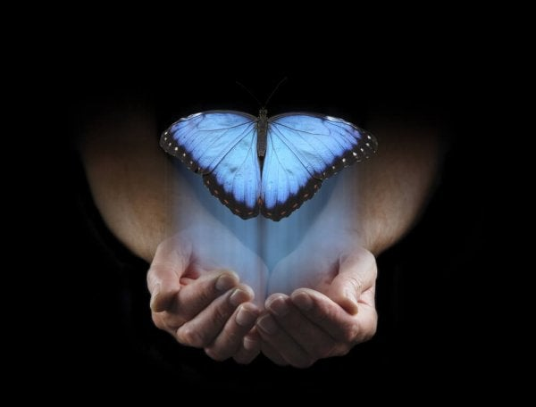 a blue butterfly in hands