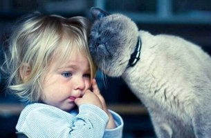Cat therapy helps children