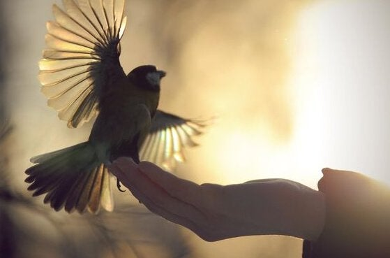a bird fluttering his wings as a hand holds him