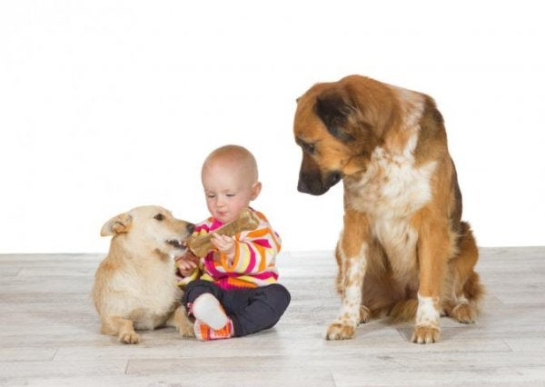 Jealous dog with baby
