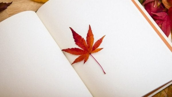 an autumn leaf in a journal