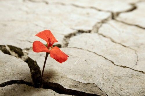 a flower sprouting through a crack in the ground