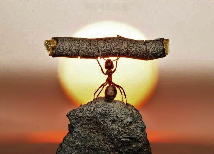 Persistence: the strength of an ant.