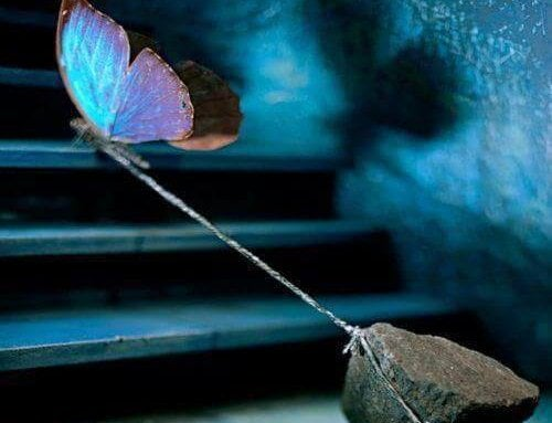 butterfly pulling stone