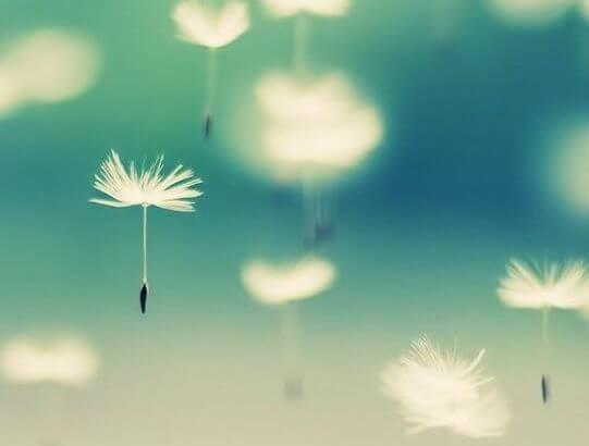 Dandelions floating through the air: a picture of Ho'oponopono