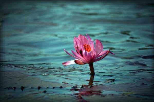 The young generation: a pink flower.